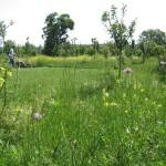 Choosing an Italian Garden Style – Organic Gardening in Italian Gardens