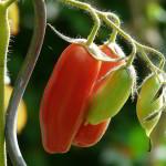 A Beginners Guide to Keeping an Italian Vegetable Garden